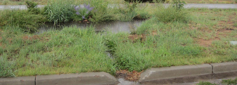 Curb cut basin